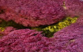 природа, красота, чудеса природы, вода, река пяти цветов, растения
