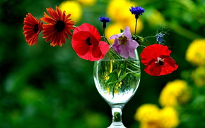 wineglass, flowers, still life