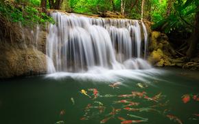 water, jungle, nature, beautiful, waterfall