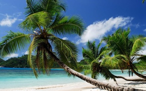 summer, ocean, beach, tropics, palm trees