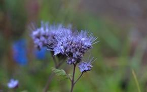 цветок, цветы, необычный, голубой, инопланетный