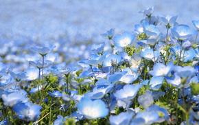 красота, цветы, Япония, парк, цветение