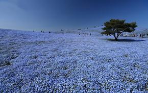 flowers, tree, park, sky, Japan