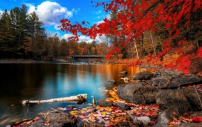 nature, nature, autumn, river