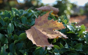 autumn, bokeh