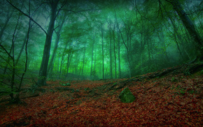 forest, foliage, nature