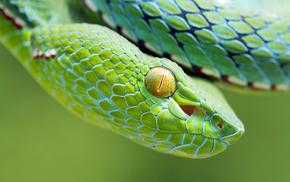 nature, snake, animals