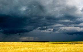 nature, cloudy, field, Ukraine