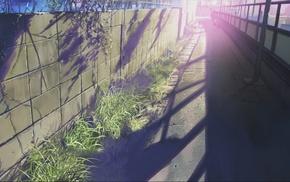 Makoto Shinkai, 5 Centimeters Per Second, anime