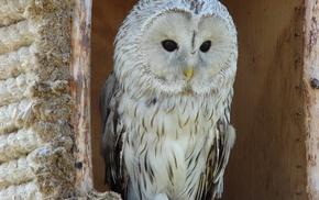 feathers, bird, owl, eyes, animals