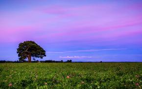 field, sunset, landscape, nature