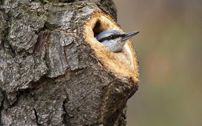 bird, tree, animals