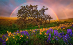 rainbow, flowers, hills, glade, nature