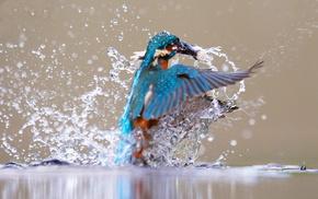 красота, рыбалочка, красивые, чудеса природы, Зимородок