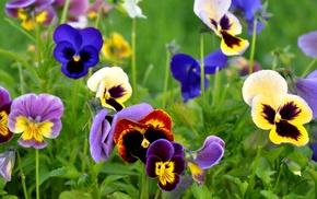 photo, flowers, nature, macro