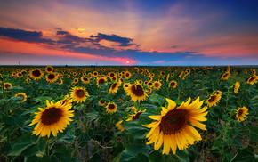 украина, солнце, тучи, небо, лето, поле