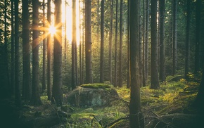 forest, trees, Sun, grass, sunlight