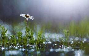 nature, rain, greenery, summer