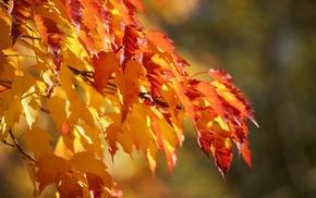 осень, макро, Листья