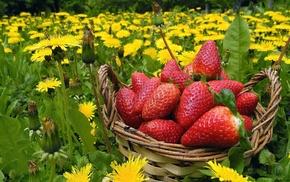 лето, корзинка, одуванчики, природа, цветы, клубника