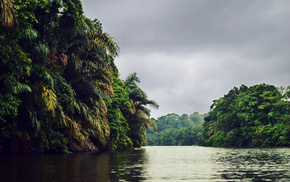 nature, river, cloudy, palm trees, jungle