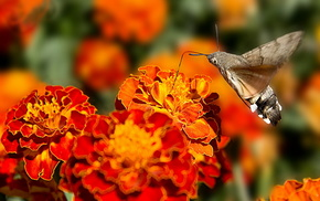 fly, stunner, flowers, butterfly