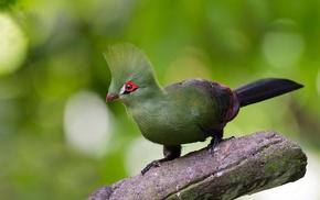 bird, tail, wings, branch, animals