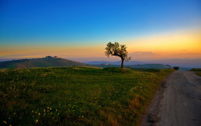 tree, morning, grass, hills, nature