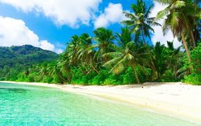 ocean, beach, tropics, nature, jungle