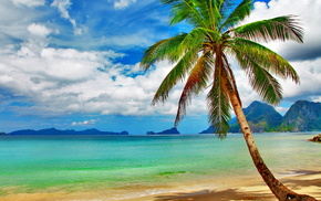 ocean, palm, beach, tropics, beautiful