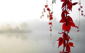 озеро, листья, Осень, туман