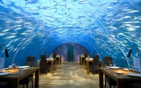 тропики, интерьер, дом и уют, Мальдивы