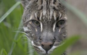 eyes, ears, animals, muzzle