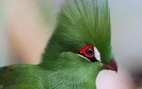 птица, красота, животные, клюв, перья, глаза