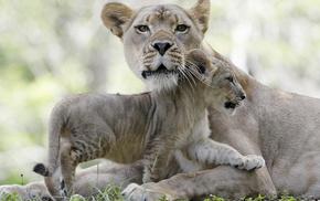 animals, tenderness, love