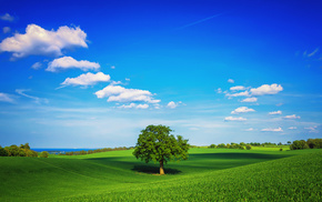clouds, sky, tree, grass, spring