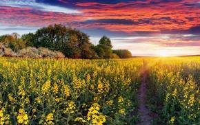 sky, Ukraine, trees, nature, field