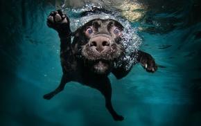 swimming pool, water, dog, swimming