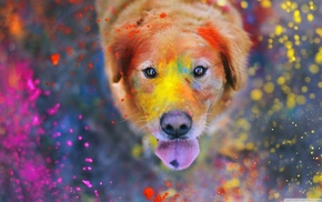 looking up, paint splatter, dust, animals, tongues, dog