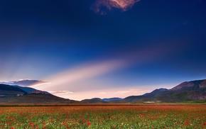 field, hills, nature, flowers, sky