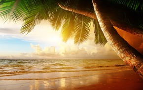 summer, sky, palm trees, cloudy, beach