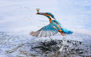 bird, splash, stunner, wings, water