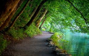 foliage, lake, runway, nature, trees