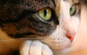 cat, stunner, animals