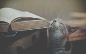 animals, book, cat