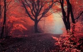 лес, природа, осень, дорога
