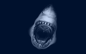 ocean, shark, animals