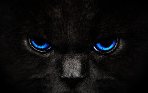 cat, predator, animals, eyes