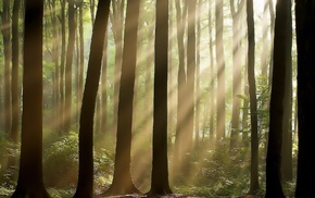 forest, rays, light, nature, trees