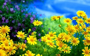 photo, nature, flowers, macro, summer